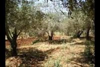 Land For Sale In Louwayzeh