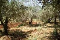 Land For Sale In Meshref